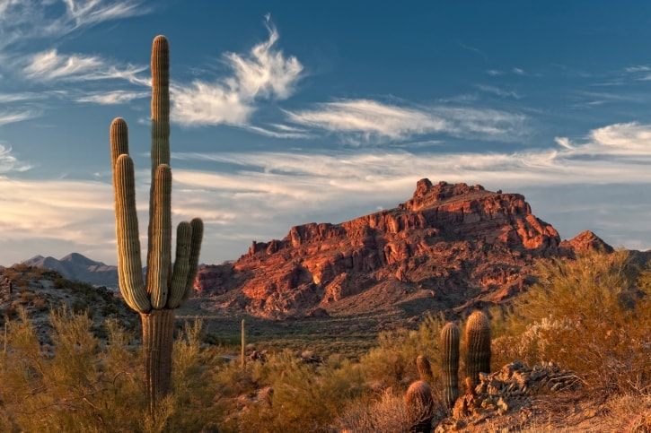Landscape shot of the desert in the city of Mesa, Arizona